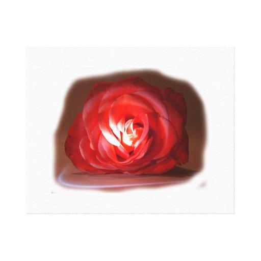 Pink Rose Spotlighted Iimage Canvas Print