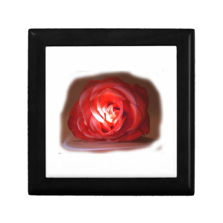 Pink Rose Spotlighted Iimage Gift Boxes