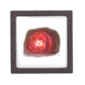 Pink Rose Spotlighted Iimage Jewelry Box