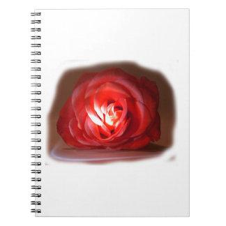 Pink Rose Spotlighted Iimage Note Book
