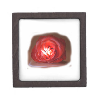 Pink Rose Spotlighted Iimage Premium Gift Boxes