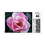 Pink Rose Stamp