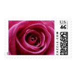 Pink rose stamps