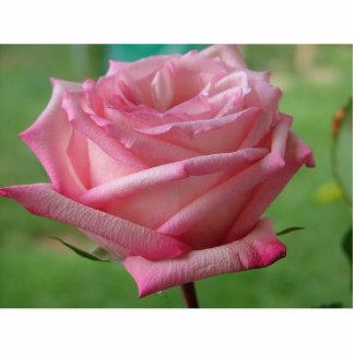 Pink Rose Standing Photo Sculpture