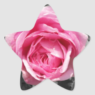 Pink Rose Star Sticker