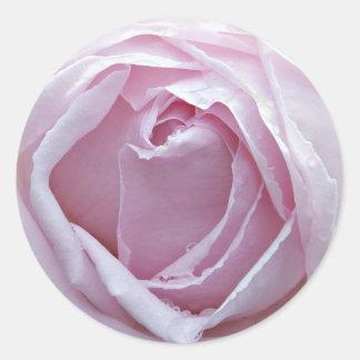 Pink rose classic round sticker