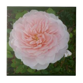 Pink Rose Small Square Tile