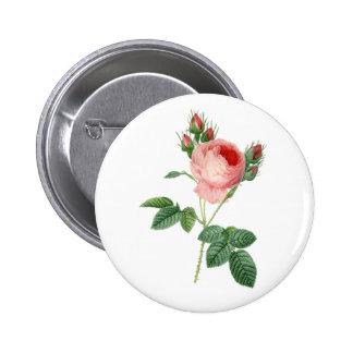 Pink rose vintage botanical illustration pinback button