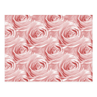 Pink Rose Wallpaper Pattern Postcard