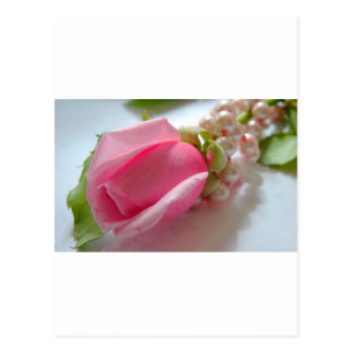 Pink rose with pearls postcard