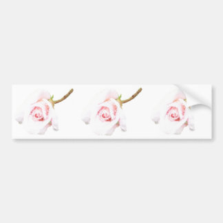 Pink Rose with rain drops Bumper Sticker