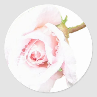 Pink Rose with rain drops Classic Round Sticker