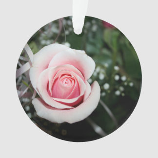 pink rose with ribbon close up flower