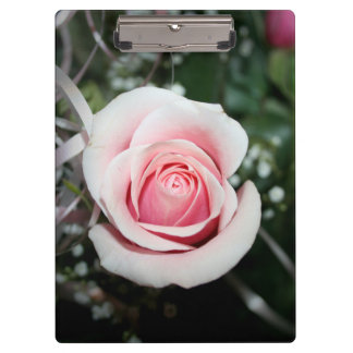pink rose with ribbon close up flower clipboards
