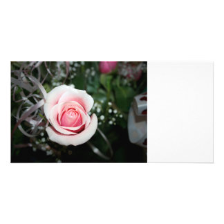 pink rose with ribbon close up flower photo cards