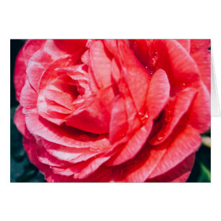 Pink Rose With Water Drops, Nature Photograph Card
