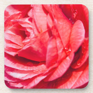 Pink Rose With Water Drops, Nature Photograph Drink Coaster