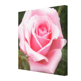 Pink Rose Wrapped Canvas Print