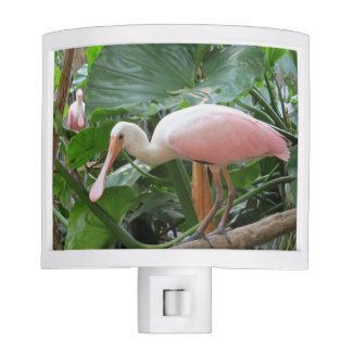 Pink Roseate Spoonbill Exotic Bird