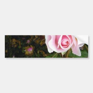 Pink Rosebud Bumper Sticker