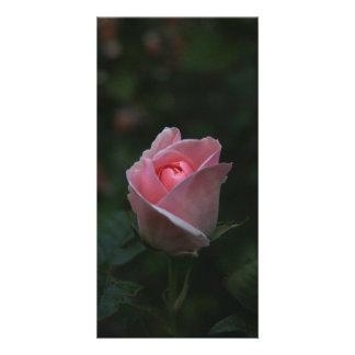 Pink rosebud card