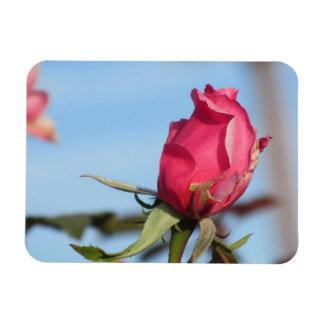 Pink Rosebud Magnet