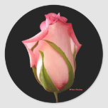 Pink Rosebud Stickers