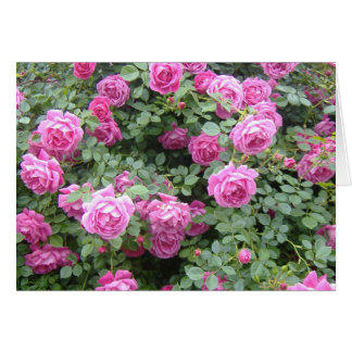 Pink Rosebush Card