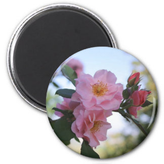 Pink Roses 2 Inch Round Magnet