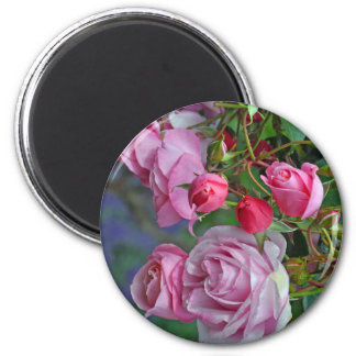 Pink roses and rosebuds 2 inch round magnet