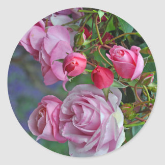 Pink roses and rosebuds classic round sticker