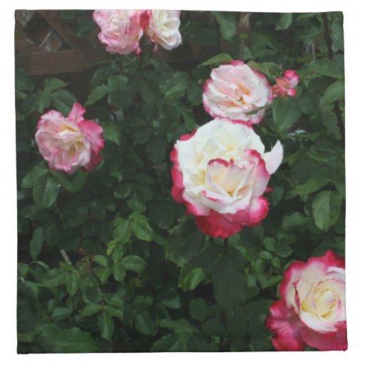 Pink Roses Cloth Napkins