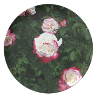 Pink Roses Dinner Plate