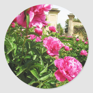 PINK ROSES - flower close up Classic Round Sticker