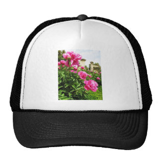 PINK ROSES - flower close up Trucker Hat