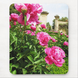 PINK ROSES - flower close up Mouse Pad