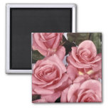 Pink Roses Fridge Magnets