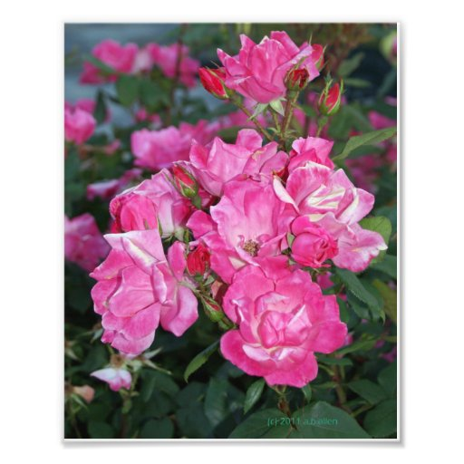 Pink Roses I Photo Art