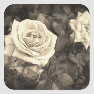 Pink Roses in Anzures 1 Antiqued Square Sticker