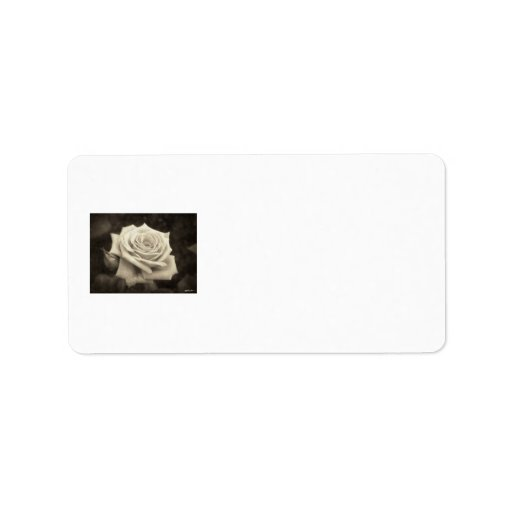 Pink Roses in Anzures 4 Antiqued Address Label