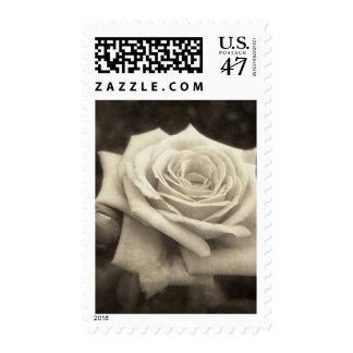 Pink Roses in Anzures 4 Antiqued Postage Stamp