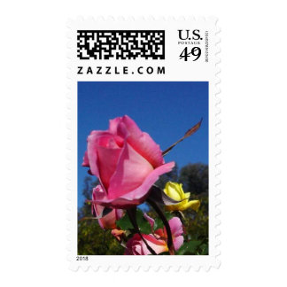 Pink Roses In Balboa Park Postage