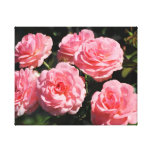 Pink Roses in bloom Canvas Prints