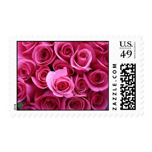 Pink rose's postage