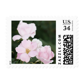 Pink Roses Postage Stamps