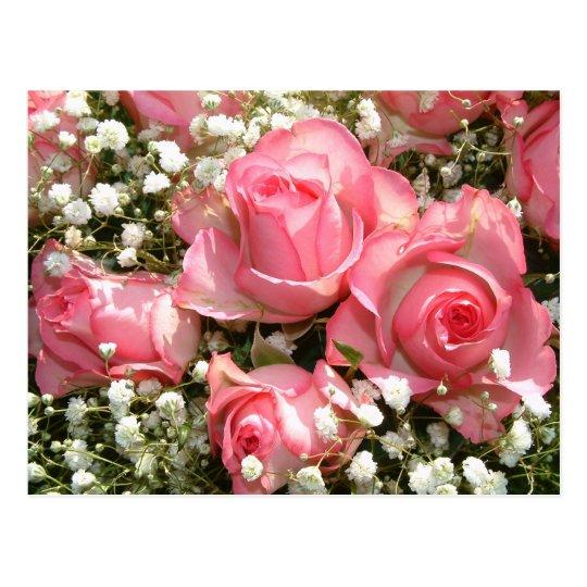 Pink Roses | Postcard