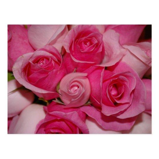 Pink Roses - Postcard