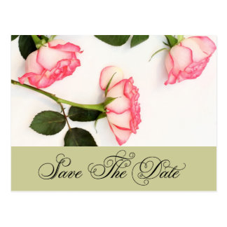 Pink roses, saved the date postcard