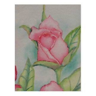 Pink Roses Soft Romantic Watercolor Girly Pretty Postcard