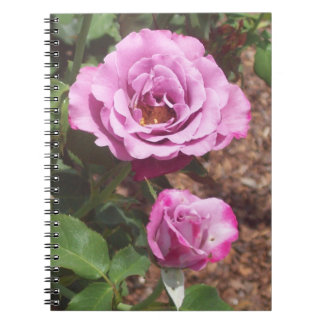 Pink Roses Spiral Photo Notebook